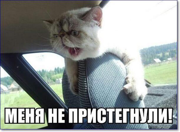 Смешные картинки про животных с надписью для ржача (15)