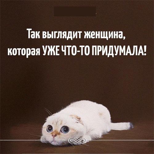 Смешные картинки про животных с надписью для ржача (17)