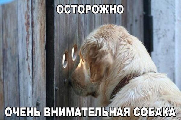 Смешные картинки про животных с надписью для ржача (18)