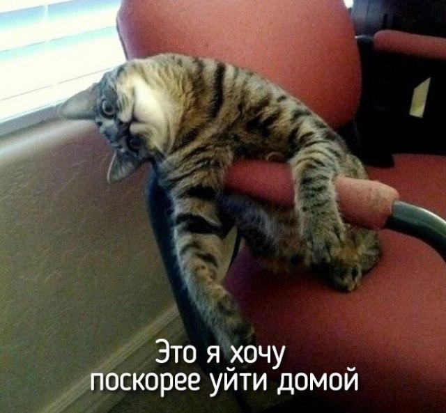Смешные картинки про животных с надписью для ржача (2)