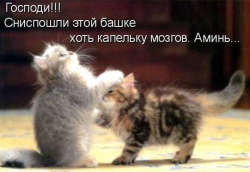 Смешные картинки про животных с надписью для ржача (23)