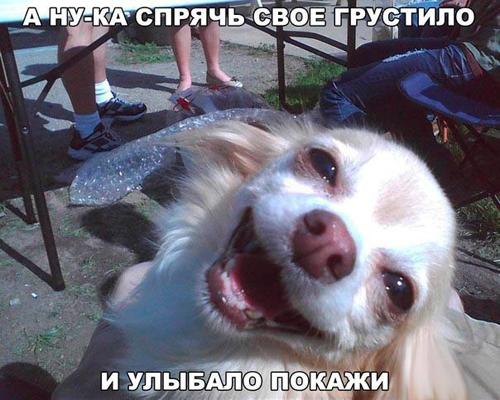 Смешные картинки про животных с надписью для ржача (25)