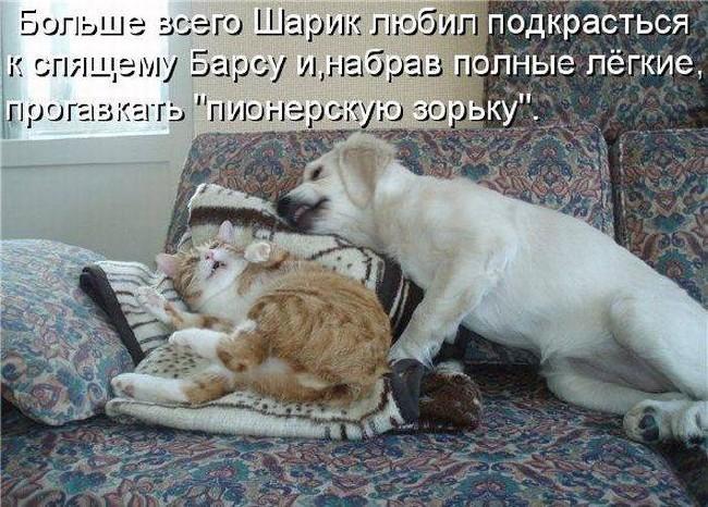 Смешные картинки про животных с надписью для ржача (26)