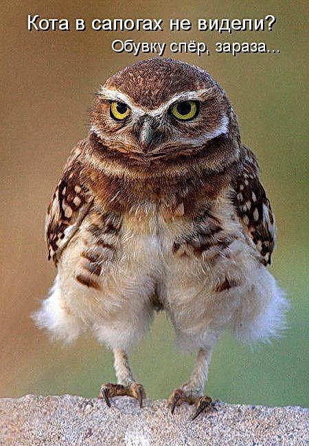 Смешные картинки про животных с надписью для ржача (27)
