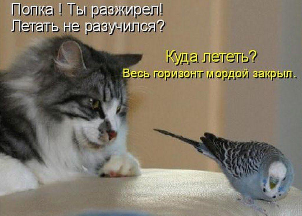 Смешные картинки про животных с надписью для ржача (28)