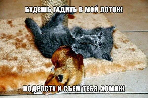 Смешные картинки про животных с надписью для ржача (29)