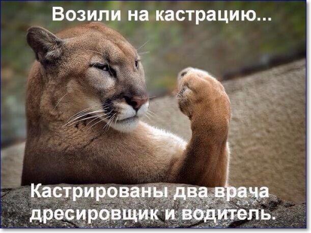 Смешные картинки про животных с надписью для ржача (3)