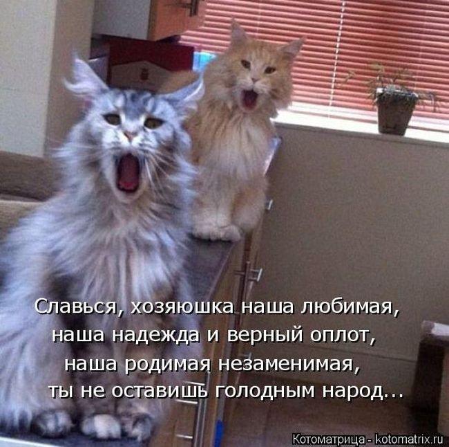 Смешные картинки про животных с надписью для ржача (30)
