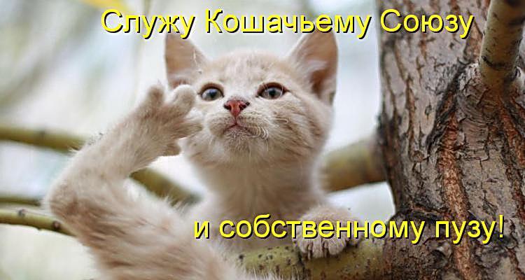Смешные картинки про животных с надписью для ржача (31)