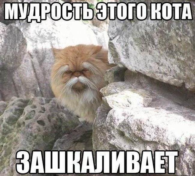 Смешные картинки про животных с надписью для ржача (32)