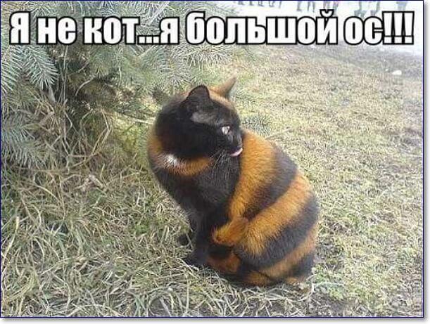 Смешные картинки про животных с надписью для ржача (33)