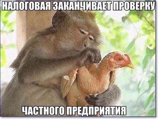 Смешные картинки про животных с надписью для ржача (34)