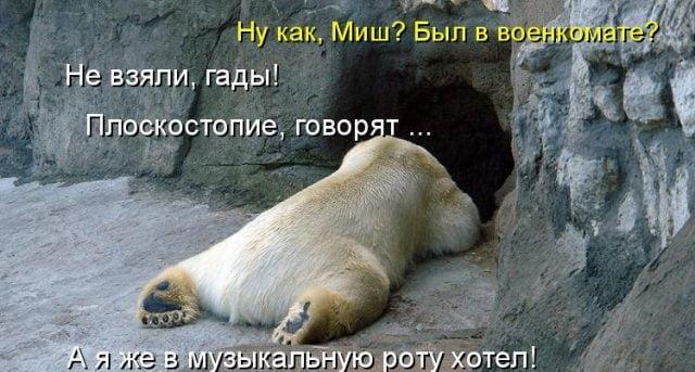 Смешные картинки про животных с надписью для ржача (5)