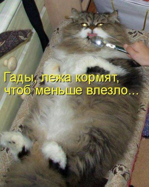 Картинки кошек со смешными надписями