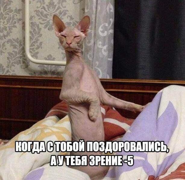 Смешные картинки про животных с надписью для ржача (8)