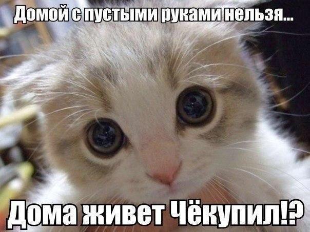 Смешные картинки про животных с надписью для ржача (9)