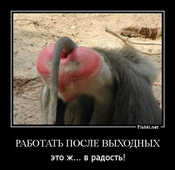 Смешные картинки про работу в понедельник014