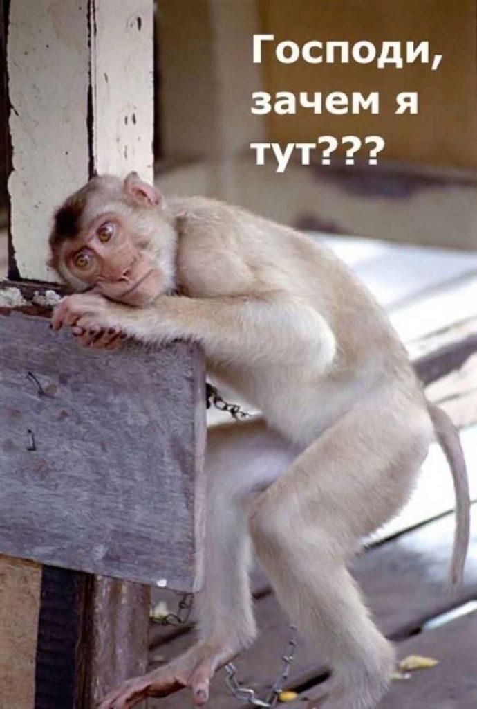 Смешные картинки про работу в субботу018