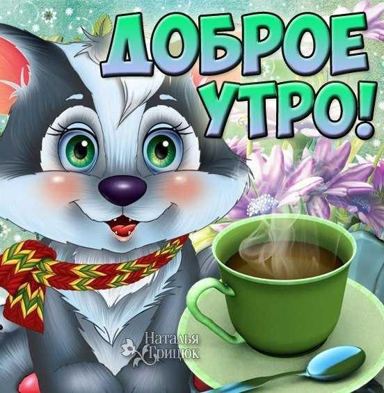 Смешные картинки с добрым утром и хорошего дня009