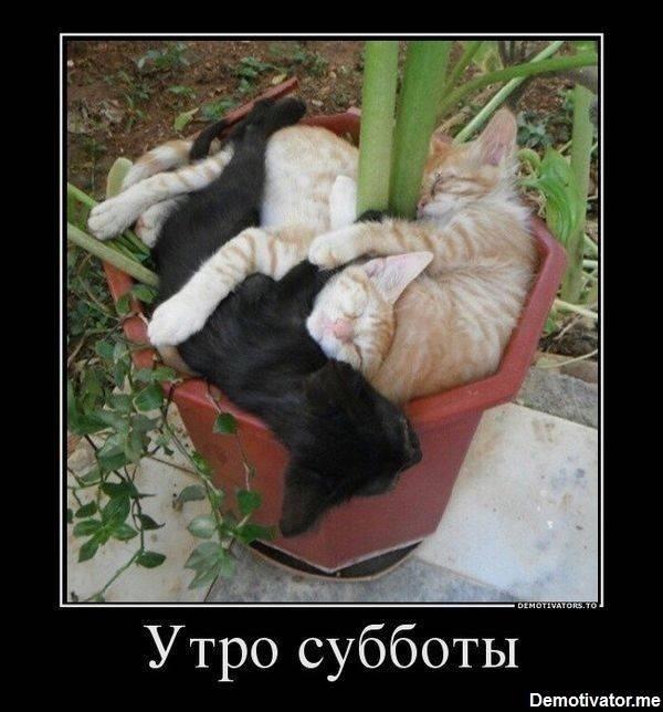 Смешные картинки с добрым утром суббота картинки011