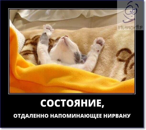 Смешные картинки с надписями про воскресенье017