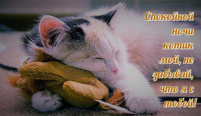 Новогодняя, картинки спокойной ночи мой сладкий котик