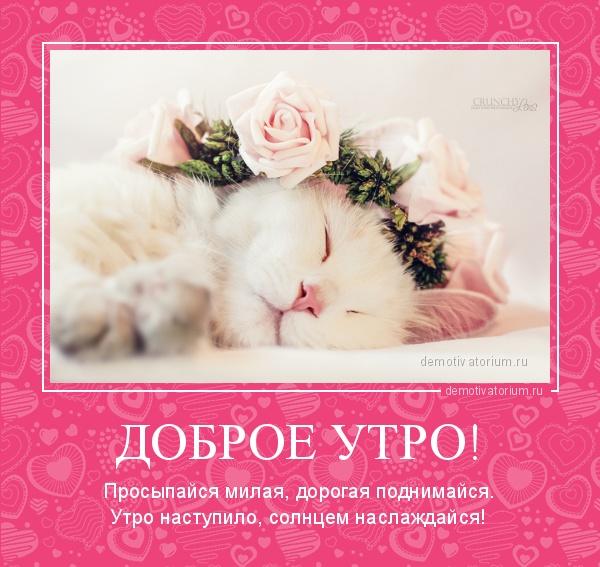 С добрым утром милая картинки красивые с надписями (19)
