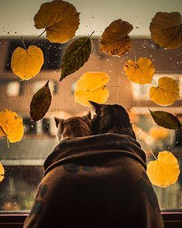 Топовые фото девушек с осенними листьями со спины (9)