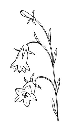 Трафарет колокольчики цветы - картинки (29)