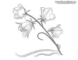Трафарет колокольчики цветы - картинки (32)