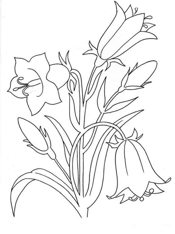 Трафарет колокольчики цветы - картинки (38)