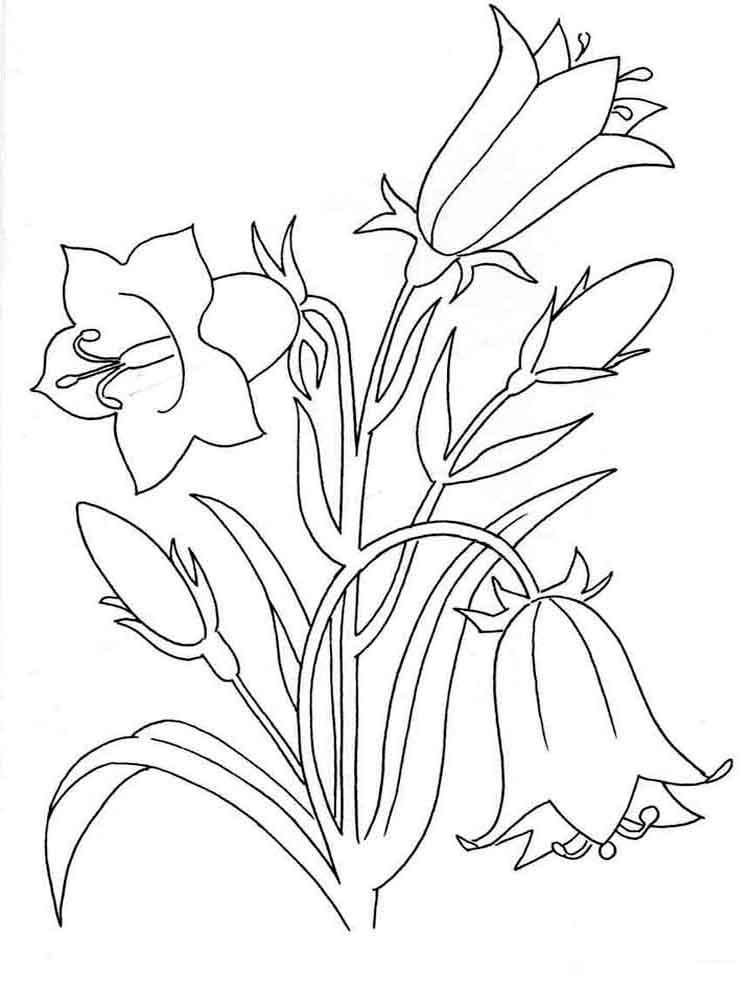 Трафарет колокольчики цветы - картинки (4)