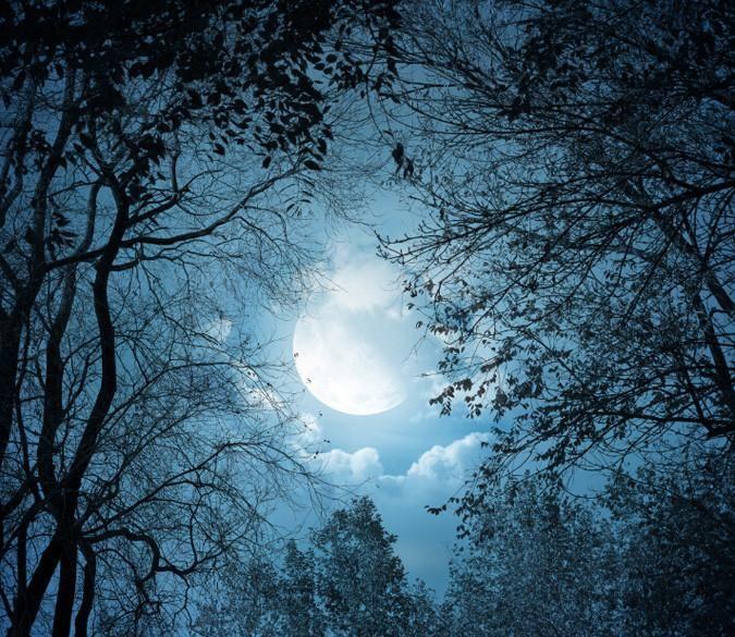 Удивительные картинки все фазы луны (29)