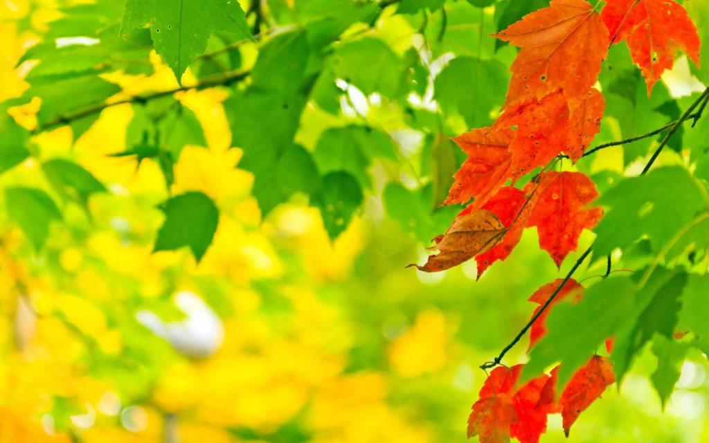 Удивительные картинки на рабочий стол октябрь осень (1)