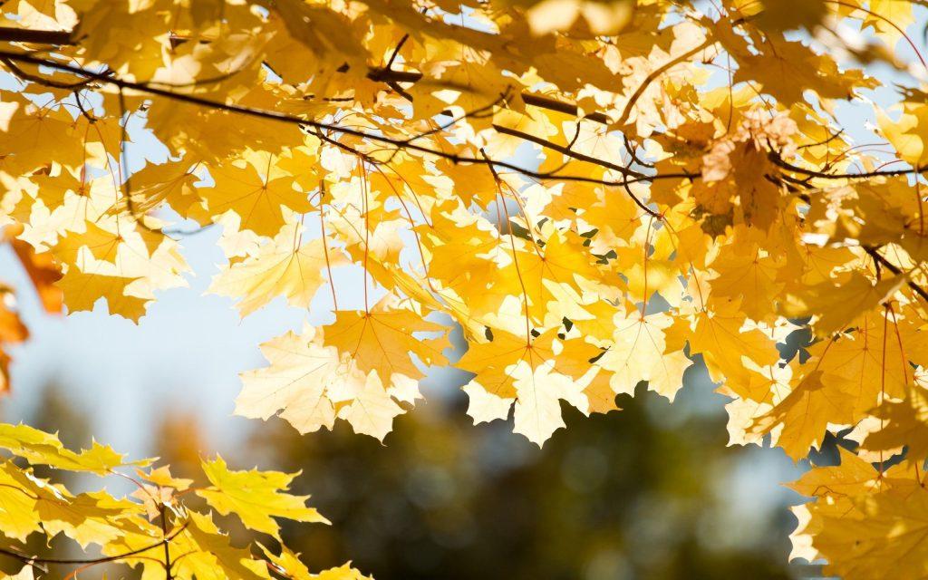 Удивительные картинки на рабочий стол октябрь осень (10)