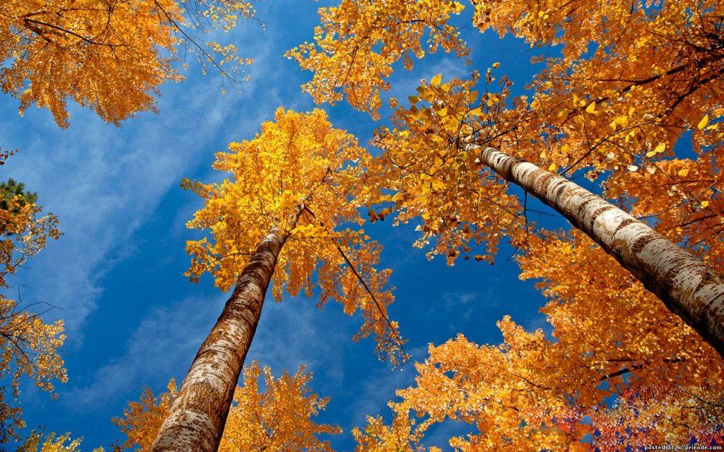 Удивительные картинки на рабочий стол октябрь осень (12)