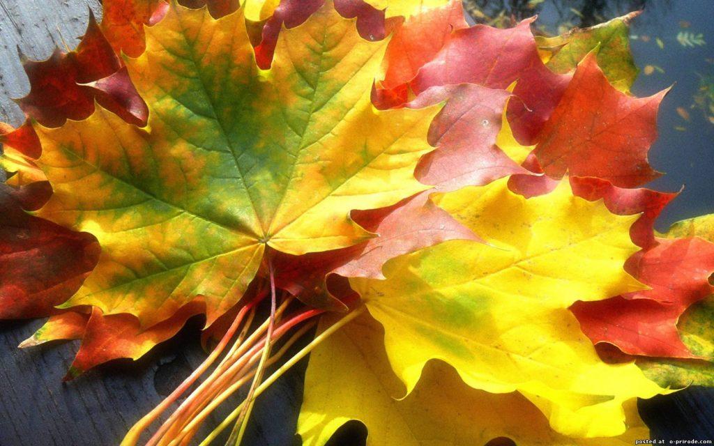 Удивительные картинки на рабочий стол октябрь осень (2)