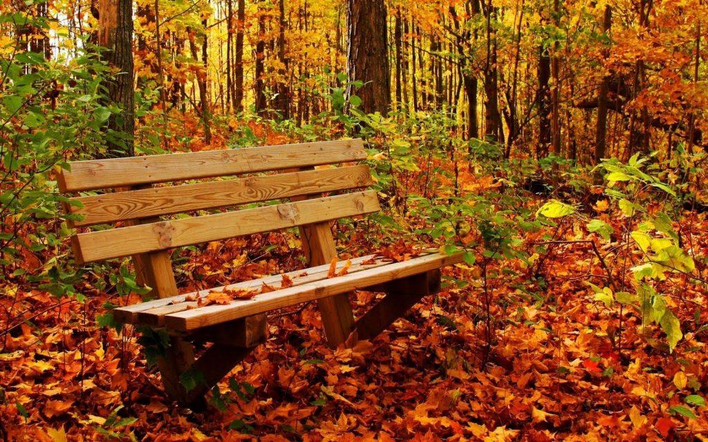 Удивительные картинки на рабочий стол октябрь осень (9)