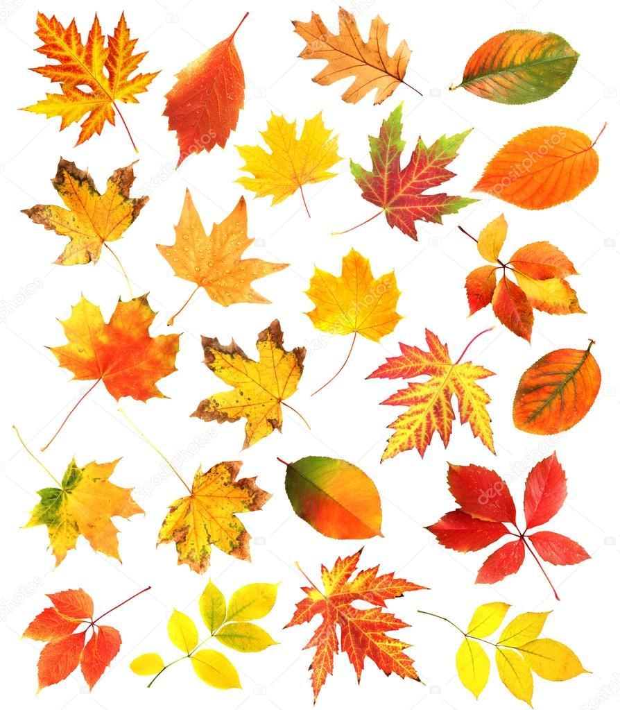 Удивительные коллажи из осенних листьев (1)
