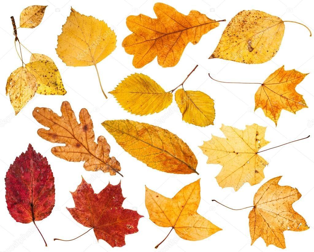 Удивительные коллажи из осенних листьев (2)