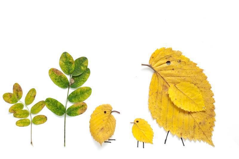 Удивительные коллажи из осенних листьев (25)