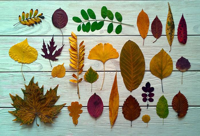 Удивительные коллажи из осенних листьев (6)