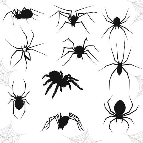 Хэллоуин пауки красивые картинки (3)