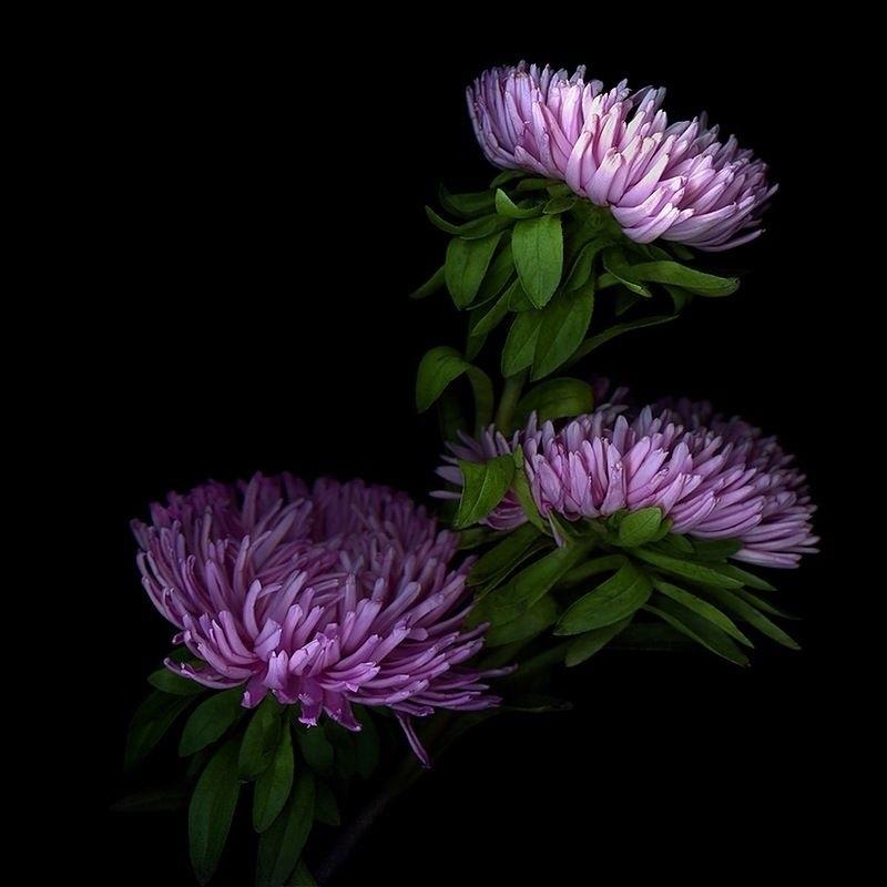 Цветы картины на черном фоне001