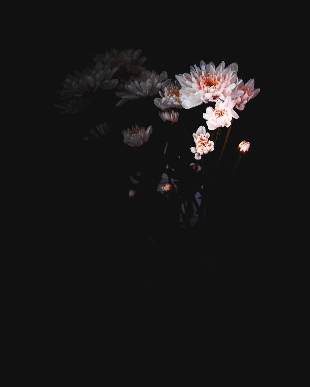 Цветы картины на черном фоне002