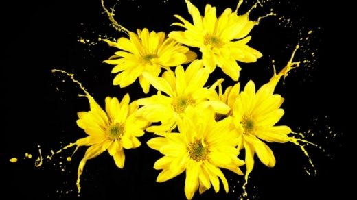 Цветы картины на черном фоне005
