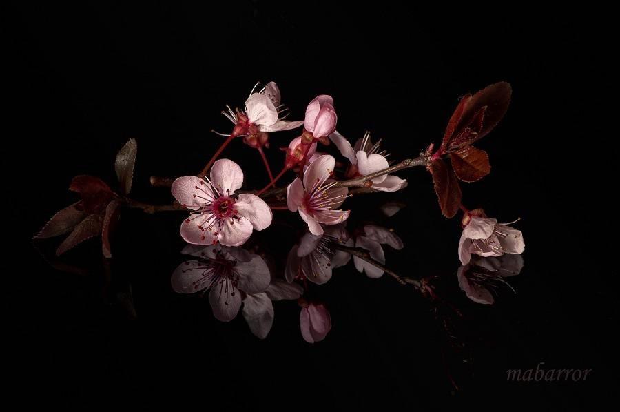 Цветы картины на черном фоне007