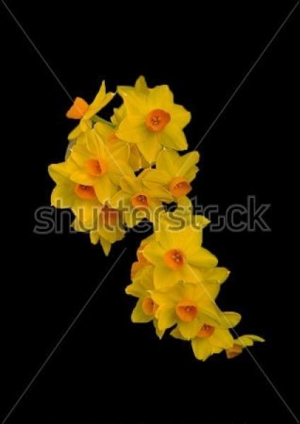 Цветы картины на черном фоне011