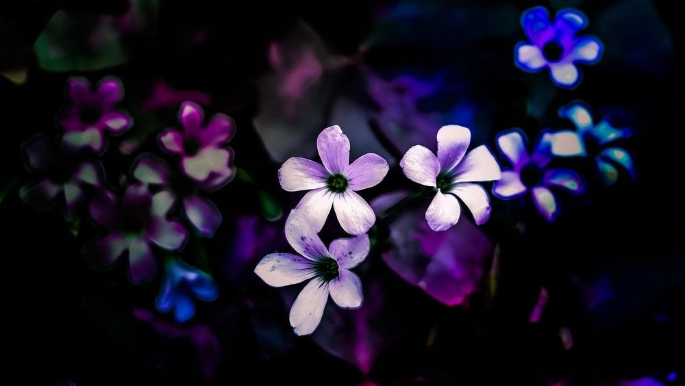 Цветы картины на черном фоне013