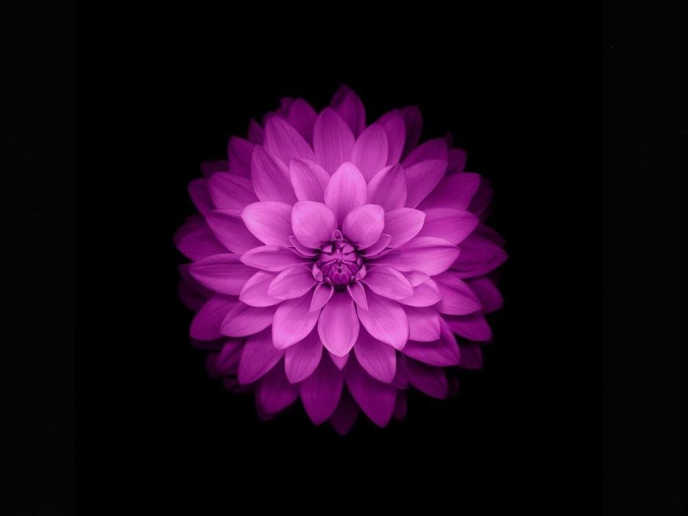 Цветы картины на черном фоне017